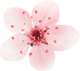 flower_4 (Demo)
